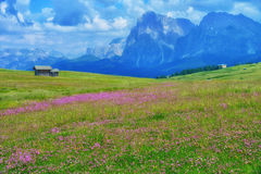 Cabins in a Meadow in the Italian Alps. Two cabins in a meadow full of flowers in the Alpina Dolomites--Alpe di Siusi--part of the Dolomites, a series of jagged Stock Photo