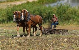 Cablaggio del cavallo della tenuta dell'agricoltore mentre lavorazione con erpice a dischi un campo di stoppie del cereale Fotografia Stock