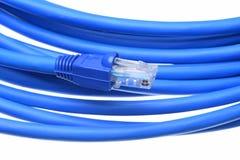Cable azul de la red de ordenadores con el enchufe Imagenes de archivo