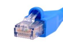 Cable azul de la red del utp cat6 aislado en el fondo blanco Imagen de archivo libre de regalías