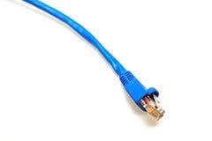 Cable azul del utp Foto de archivo libre de regalías