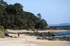 Cable Bay in Northland New Zealand Stock Image