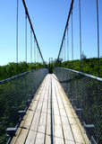 Cable Bridge. A cable bridge over a gap in the trees Royalty Free Stock Photo
