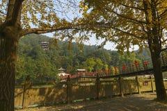 Cable bridge at autumn. Ancient cable bridge called nanqiao at dujiangyan , china royalty free stock image