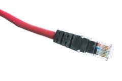 Cable de la red con el aislante RJ45 Imágenes de archivo libres de regalías