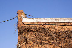 Cable and Dry Creeper on Side of Red Brick Building Stock Image
