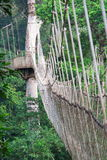 Cable-stayed bridge in tree canopies, Africa. Cable-stayed bridge in Kakum National Park in Southern Ghana, Africa. The park protects one of the most extensive stock photo