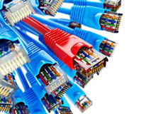 Cables de Ethernet RJ45 de la conexión de red del LAN Choise del proveedor Foto de archivo