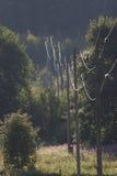 Cables eléctricos Imagen de archivo libre de regalías