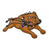 Cables penetrantes de la mascota del dogo Imagenes de archivo