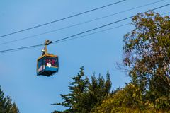 Cableway over Arboretum, Sochi, Russia. Bottom view of the cabin of cableway over the trees of Arboretum in sunny day, Sochi, Russia Stock Photos