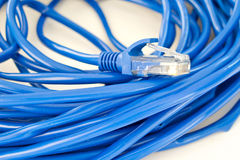 Cabo da rede de UTP Fotos de Stock