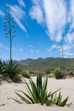 Cabo de Gata. Scenics at Cabo de Gata natural park, Almeria, Spain Royalty Free Stock Images