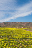 Cabo de Gata at springtime, in Almeria Royalty Free Stock Photo