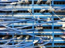 Cabo de lan da rede Fotos de Stock