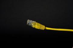 Cabo de LAN Network com o conector RJ-45 Foto de Stock