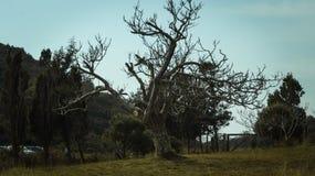 Cabo de Rodon imagem de stock royalty free