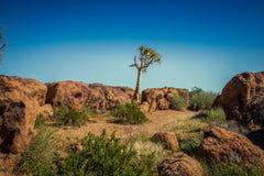 Cabo do norte África do Sul do parque nacional Imagens de Stock Royalty Free