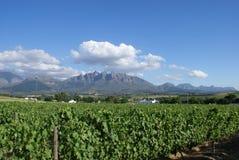 Cabo ocidental do lanscape do vinhedo Imagens de Stock Royalty Free