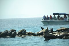 Cabo San Lucas, Baja California, Mexico, 06/07/2018: A tour boat of tourist is approaching an island of sea lions breeding. royalty free stock photography