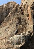 Cabo San Lucas. Mexico Pelican Royalty Free Stock Photos
