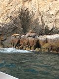Cabo San Lucas Sea Lions fotos de archivo