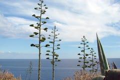 Cabo Sounion da parte do sul do continente Grécia 06 20 2014 Paisagem marinha e paisagem da vegetação do deserto do Imagem de Stock Royalty Free