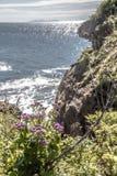 Cabo Tomisina na ilha do russo fotos de stock