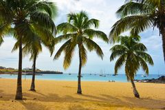 Cabo Verde, playa de la bahía de Tarrafal, árboles de cocos en la arena, paisaje tropical - Santiago Island imágenes de archivo libres de regalías