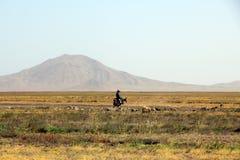 Cabo Verde wild lebende Tiere Stockfotografie