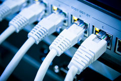 Cabos da rede conectados ao interruptor Imagem de Stock Royalty Free