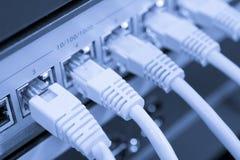 Cabos da rede conectados ao interruptor Fotografia de Stock Royalty Free