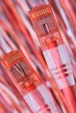 Cabos do computador de rede com tomadas Fotos de Stock Royalty Free
