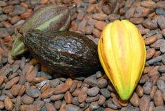 Cabos e fave di cacao vicino su immagini stock