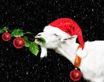 Cabra blanca del Año Nuevo en el sombrero de Papá Noel Fotografía de archivo