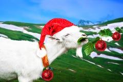 Cabra blanca del Año Nuevo en un prado Imagen de archivo