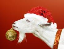 Cabra blanca que sostiene el juguete de oro de la Navidad Foto de archivo