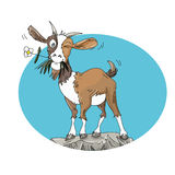 Cabra com flor para cima um projeto cômico do humorista do fundo do céu da rocha Imagens de Stock Royalty Free