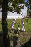Cabra de alimentação 2 Imagem de Stock