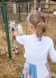 Cabra de alimentación de la niña Foto de archivo libre de regalías