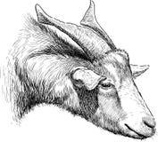 Cabra de cuernos Foto de archivo libre de regalías