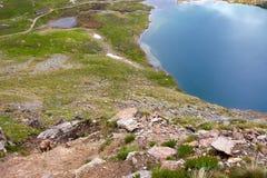 Cabra de montaña que pasta Imagenes de archivo