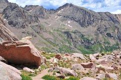 Cabra de montanha nas Montanhas Rochosas Imagens de Stock Royalty Free