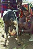 Cabra de ordeño lejos adolescente en vestido colorido tradicional Fotografía de archivo libre de regalías