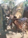 Cabra del hierro Imágenes de archivo libres de regalías