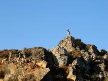 Cabra en las rocas Imagen de archivo libre de regalías