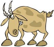 Cabra irritada Imagens de Stock