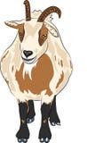 Cabra manchada do vetor desenhos animados engraçados divertidos Fotos de Stock Royalty Free