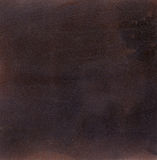 Cabra-montesa do marrom escuro Fotos de Stock Royalty Free