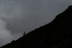 Cabra-montesa nas montanhas (rupicapra do Rupicapra) Imagem de Stock Royalty Free